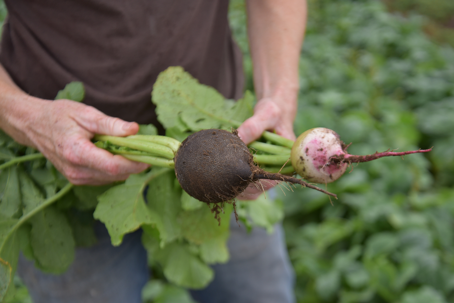 Sustainable farming is a centerpiece of our handmade delivery meal kits in Boston.
